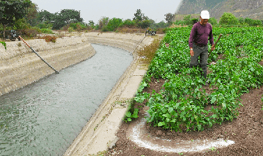 Irrigation Efficiency: more food with less water