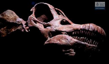 Dinosaurios de la Patagonia
