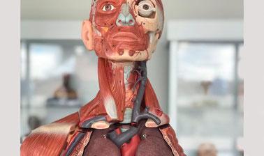 Fundamentos de anatomía y técnica quirúrgica básica