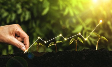 Economics and Policies in a Biobased Economy