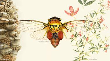 Honey Bee Natural History