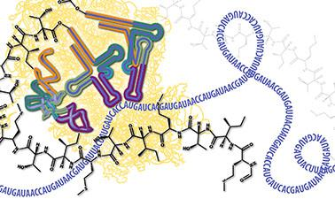 Molecular Biology – Part 3: RNA Processing and Translation | edX