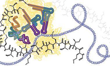 molecular biology part 3 rna processing and translation