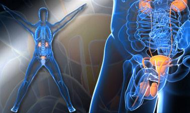 Introduction to Urology