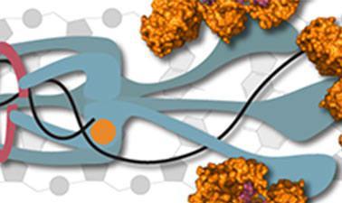 Molecular Biology - Part 1: DNA Replication and Repair