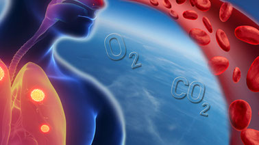 Respiration in the Human Body