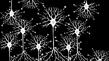 Research Identifies Complex Of Neurons >> Fundamentals Of Neuroscience Part 2 Neurons And Networks